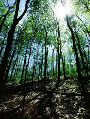 carbon-dioxide-climate-change